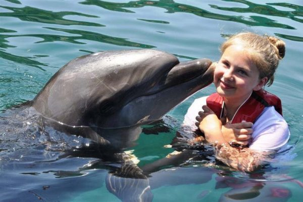 dolphin in marmaris