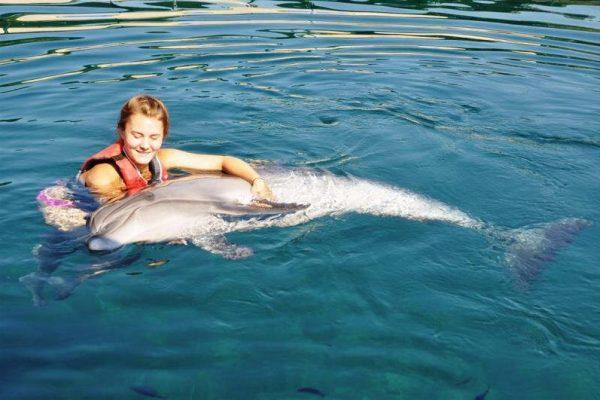 dolphin swim in sarigerme